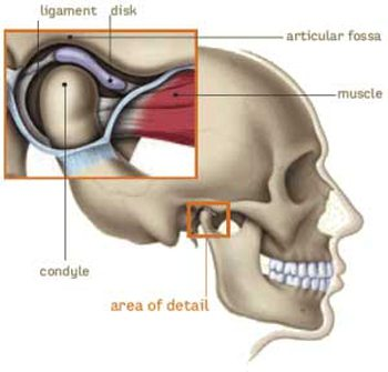 Illustration of the TMJ joint